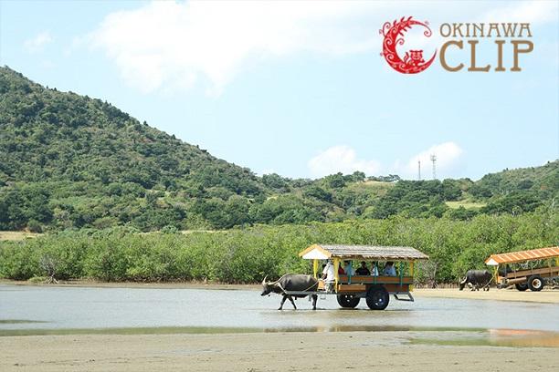 【JAL×冲绳CLIP视频】游览自然与动植物的宝库之西表岛