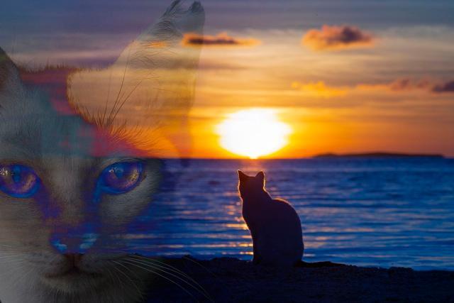 """『岛猫电影Nyaha!』围绕着美丽珊瑚礁大海的岛猫乐园""""Nyaha岛""""之故事"""